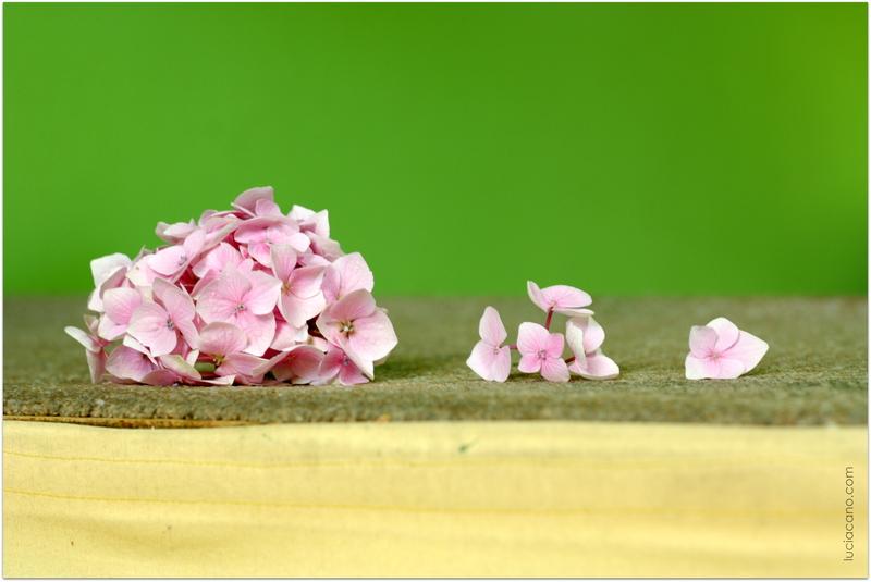 Descubre como conservar un ramo de flores de hortensias