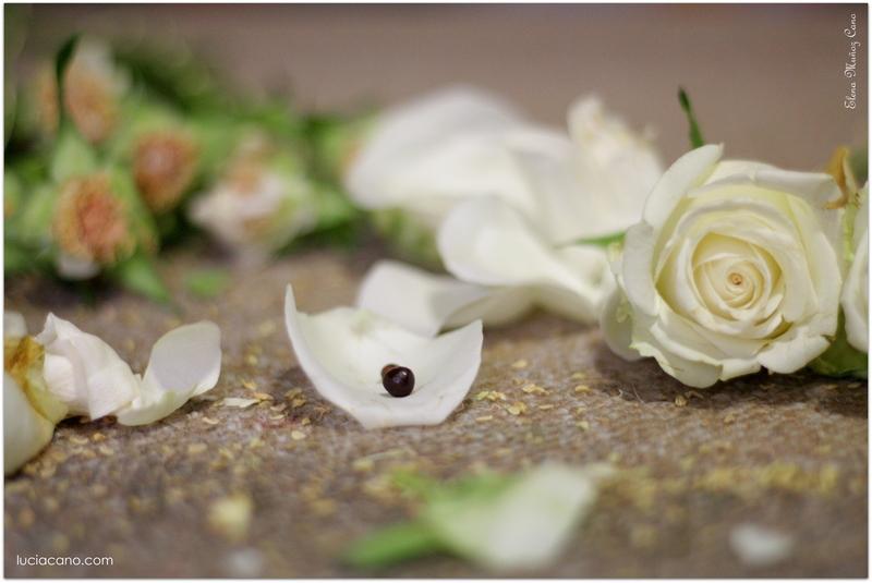 Descubre como conservar un ramo de novia de rosas blancas
