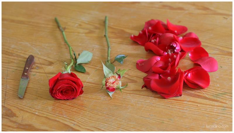 Descubre como secar un ramo de rosas rojas