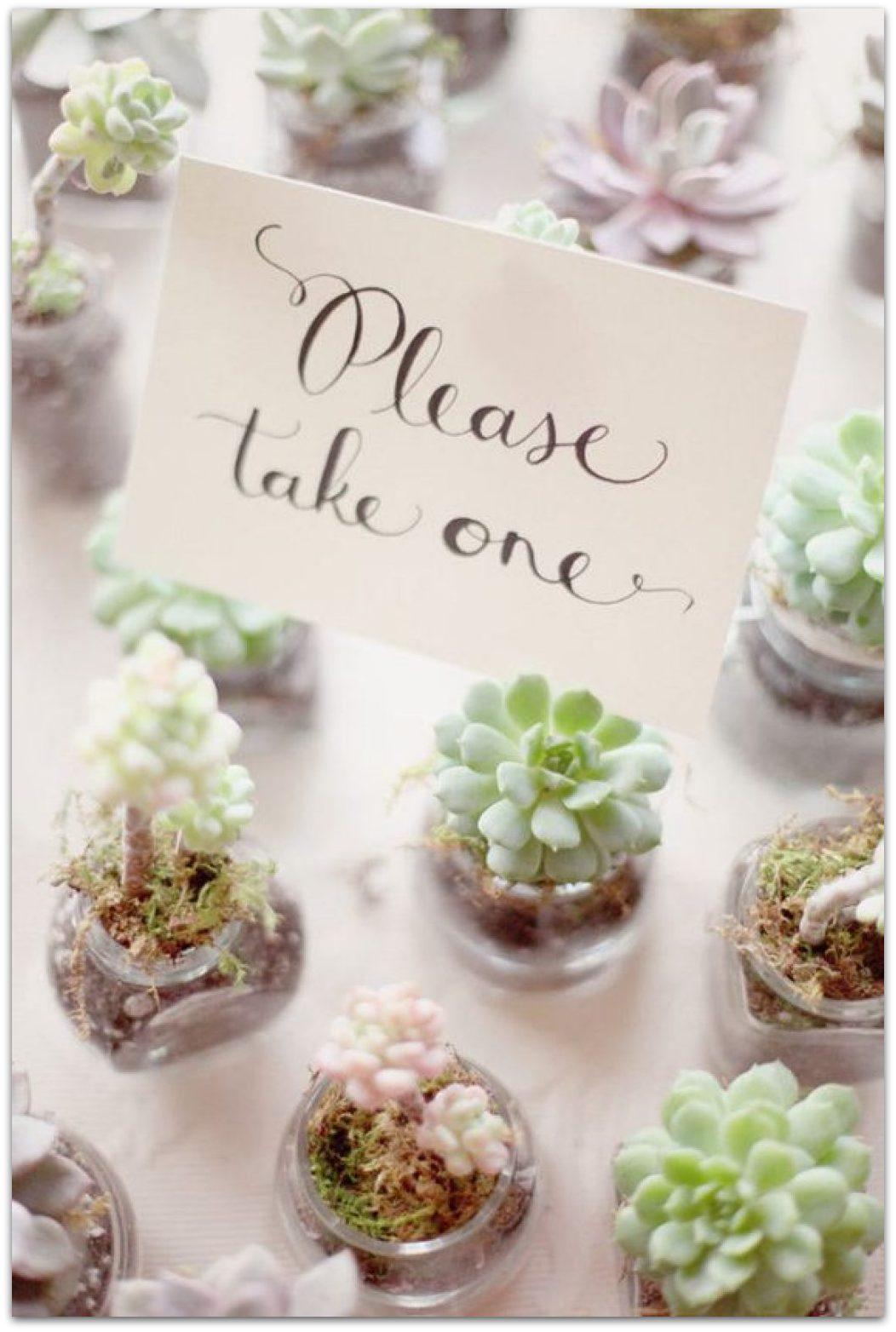 detalles originales para bodas ecologicas regalar plantas